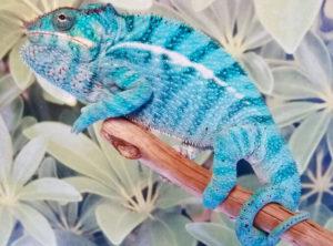 panther chameleon for sale, buy panther chameleons, panther chameleon breeders